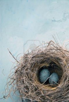 Bird nest with blue eggs