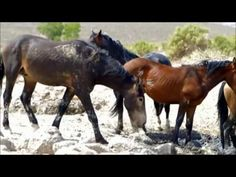 Operation Wildlife Rescue – Mustang Mismanagement - Freedom Outpost