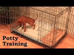 Potty Training Puppy Apartment - Full Video - How To Potty Train A Puppy...