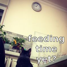 Cat is waiting patiently for feeding time.