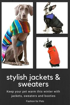 Your pet will look stylish while keeping warm with these great jackets and sweaters. Keep them warm this winter. leg warmers for dogs, snowsuits for large dogs, snowsuit for dogs, winter wear for dogs,  thunder vest for dogs,  winter care for dogs,  winter boots for dogs,  winter hats for dogs,  apparel for dogs,  apparel for small dogs,   apparels for dogs,