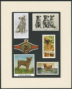 Brussels Griffon Vintage Dog Breed Cards and Collectables Mounted Ready to Frame | eBay