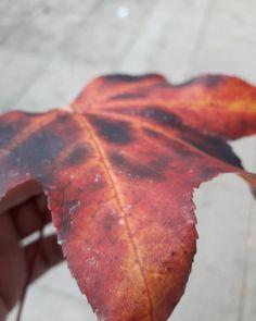 """""""Ella lleva los colores del otoño en su cabello junto con la calidez del verano en su mirada, haciéndote sentir cual mariposas en primavera cuando sonríe. Qué lástima que entre tantas estaciones, sea el helado invierno el que domine su corazón"""" Tumblr: juego-de-palabras «Amor en 4 estaciones» #Words #Tumblr #Argentina #Seasons #Season #Spring #Autumn #Winter #Summer #Red #Ph #Photography #Photo #Falling #Live #Fellings #Cold  #Palabras #Estaciones #Verano #Invierno #Primavera #Otoño…"""