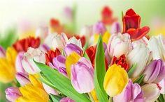 壁紙をダウンロードする 色とりどりの花, 春, チューリップ, 花束