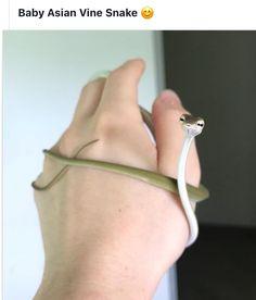 Judgemental shoelace