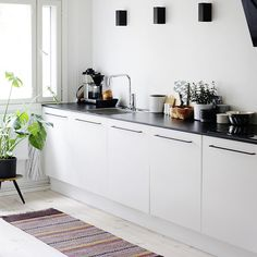 modern sleek kitchen, green plant