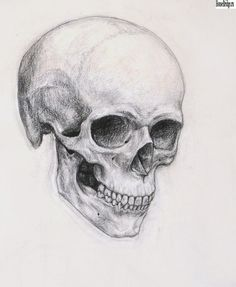 Skull drawing has been noted for its own way of expressing a drawing style. Many people are interested in skull drawing. Some draw it funny,. Skeleton Drawings, Skeleton Art, Pencil Art, Pencil Drawings, Art Drawings, Cool Skull Drawings, Dragon Drawings, Anatomy Art, Anatomy Drawing