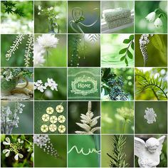 green and white collage