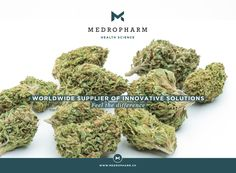 It is our pleasure to present you two new hemp-strains, which exhibit no psycho-active effects. This is ensured by a high cannabidiol (CBD) content with only trace amounts of tetrahydrocannabinol (Δ9-THC <0.8%). As pioneers regarding the introduction of medicinal cannabis into medical therapies, it is our main focus to guarantee an uncomplicated and reliable treatment to patients suffering from various afflictions. #thc #medicalcannabis #cannabidiol #cbd #marijuana #medicalmarijuana Cbd Hemp Oil, Medical Cannabis, Exhibit, Herbs, Content, Ganja, Health, Science, Health Care