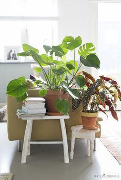 Bohemian Interior, Interior Styling, Interior Decorating, Diy Bedroom Decor, Living Room Decor, Living Spaces, Home Decor, Contemporary Garden Rooms, Corner Garden