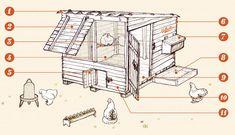 Construire un poulailler pour le bien-être de nos poulettes Un logement sain  des poules en bonne santé