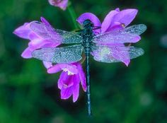 my favorite things... purple and a dragon fly