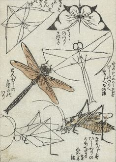 1812 Woodblock Illustration Of Insects