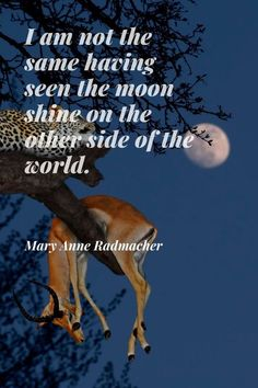 """I am not the same having seen the moon shine on the other side of the world."" * Mary Anne Radmacher (American writer and artist) #travel #safari #Africa #quotes #sayings #inspirational #leopard #impala #moon"