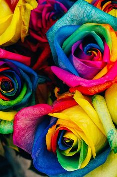 See my collection of best FREE HD beautiful iPhone and Android wallpapers and background images, handpicked just for you. Flower Phone Wallpaper, Rainbow Wallpaper, Colorful Wallpaper, Flower Wallpaper, Wallpaper Backgrounds, Iphone Wallpaper, Wallpapers, Cellphone Wallpaper, Rainbow Flowers