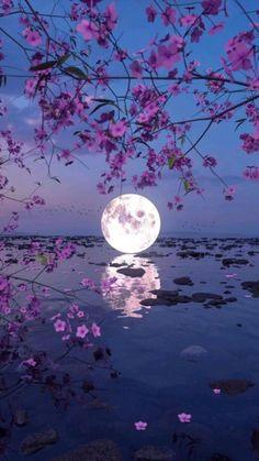 Science And Nature Books, Night Sky Photos, Paris At Night, Moon Photography, Moon Magic, Nature Illustration, Beautiful Moon, Nature Journal, Aesthetic Iphone Wallpaper