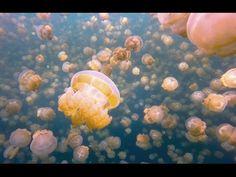 10 Bizarre Eigenheiten der Ocean Life Caught On Film - http://bestelisten.com/10-bizarre-eigenheiten-der-ocean-life-caught-on-film/