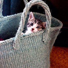 おはようございます。#goodmorning #cat#kitten#猫#子猫 - @yuriri51- #webstagram