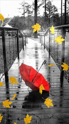 Color splash rain umbrella mixed with autumn Games Tattoo, I Love Rain, Autumn Rain, Umbrella Art, Rain Photography, Singing In The Rain, Rainy Days, Belle Photo, Color Splash