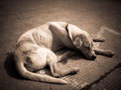 Animais domésticos abandonados ainda reflete falta de conscientização - 10:25 Saulo Valley  Talvez você caminhe pelas ruas de seu bairro e não encontre mais que um ou dois cães ou gatos perdidos ou deixados. Mas existem no Brasil, lugares que são verdadeiros depósitos destes pequeninos e frágeis sobreviventes urbanos. CONTINUE LENDO:  http://saulovalley.blogspot.com.br/2014/07/animais-domesticos-abandonados-ainda.html#.U8vDQeNdV9U