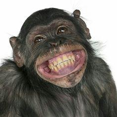 New Memes Chistosos Viernes Ideas Monkey Pictures, Funny Animal Pictures, Cute Funny Animals, Cute Baby Animals, Birthday Wishes, Happy Birthday, Birthday Memes, Smiling Animals, New Memes