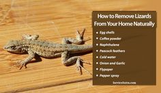 61c19a24e4d6301e35e1c47685b40132 - How To Get Rid Of Wall Lizards At Home