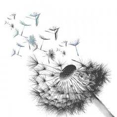Dandelion Plant, White Dandelion, Dandelion Flower, Watercolor Background, Watercolor Flowers, Lotus Symbol, Photoshop, Nature Rose, Flower Clipart Png
