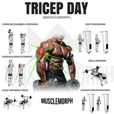 Triceps workout is the most important workout for your arm. Triceps muscle help you in improving your flexibility, increasing your arms size and increase your arms strength. Fitness Workouts, Weight Training Workouts, Gym Workout Tips, Biceps Workout, Fitness Tips, Fitness Motivation, Gym Tips, Workout Women, Cycling Workout