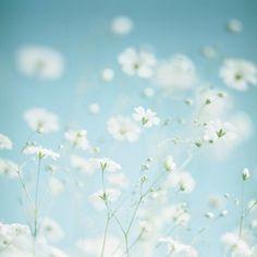 Soft & Flowery