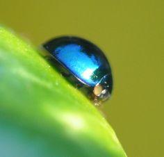 ladybird - Pesquisa Google