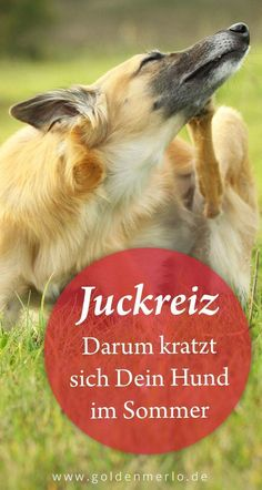You searched for Juckreiz - BeautyTime First Week Of Pregnancy, Headache And Dizziness, Yorky, Street Dogs, Akita, Shih Tzu, Dog Love, How To Find Out, Terrier