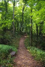 could get lost in here ~  looks like a great trail