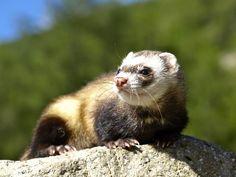 Kuwety dla małych ssaków:  http://www.kakadu.pl/Inne-akcesoria-dla-ma%C5%82ych-ssakow/kuwety-dla-maych-ssakow.html