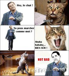 <u>Pas mal le chat...</u>
