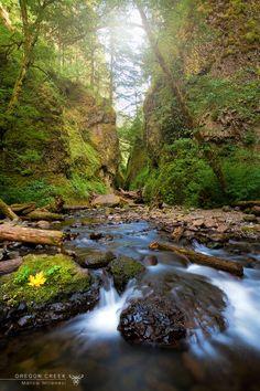 ..Oregon creek   Mt Hood National forest   Oregon (USA)..