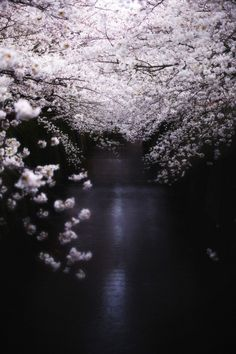 The Second closed their eyes; The blue sky was no longer visible above, filled now with the radiance of thousands of white flowers.  And in the waters below the Second saw no reflection, only the darkness of the inky sea. (text:Silent)
