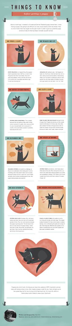 Things to Know Before Getting a Puppy #Infographics — Lightscap3s.com