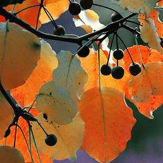 Watercolor Negative Painting, Watercolor Paintings, Gouache Painting, Tumblr Photography, Nature Photography, Photography Flowers, Photography Lighting, Orange Design, Blue Design