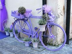 lavender bike with plants