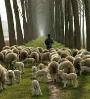 Thoughts and Questions from Aramis Thorn: I AM – The Good Shepherd