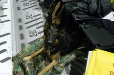 » To care for each individual SOF K9 with dignity and grace
