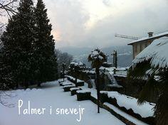 Snow on palmtrees Monet, Snow, Outdoor, Instagram, Outdoors, Outdoor Living, Garden, Eyes