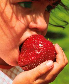 Jordgubben 'Gigantella Maxim' (Fragaria x ananassa) är en medeltidig sort som ger kompakta jordgubbar. En enda 100g jordgubbe tar upp hela din handflata. 'Gigantella Maxim' har fast, saftigt fruktkött och en ljuvlig smak.