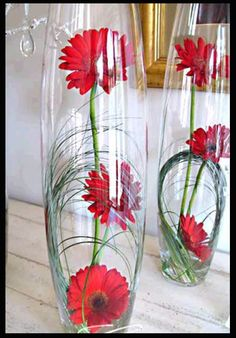submerged gerbera daisy (change color)