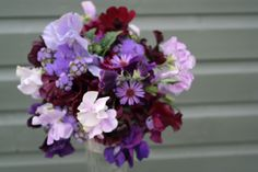 Lilac and plum sweet pea posy, September