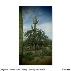 Saguaro Cactus  And Tree Poster