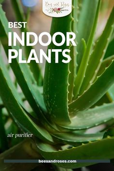There are a collection of houseplants that are certified by NASA to help clean and remove toxins from the air. Check out this article for the full list of them. You could even try planting one in your room for better sleep. #airpurifyingplants #houseplanttips #beesandrosesblog Best Indoor Hanging Plants, Outdoor Plants, Living Room Plants, Bedroom Plants, Low Light Plants, Plant Guide, Plant Shelves, Air Purifier, Low Lights