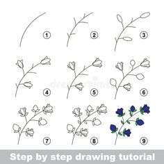 Illustration about Step by step drawing tutorial. How to draw a Bluebell. Illustration of preschool, contour, draw - 65220584 Painting & Drawing, Leaf Drawing, Floral Drawing, Plant Drawing, Drawing Drawing, Drawing Tips, Drawing Faces, Drawing Flowers, Watercolor Drawing