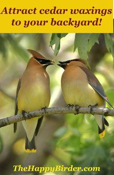 Wild Bird Feeders, Large Bird Feeders, Best Bird Feeders, Ontario Birds, Cedar Waxwing, Homemade Bird Feeders, Garden Animals, How To Attract Birds, Backyard Birds