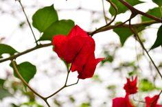 Hojas rojas en dia nublado, pequeños cosas pueden esconder buenas tomas